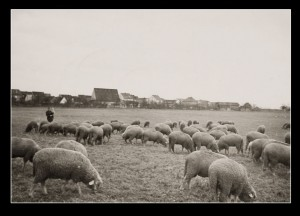 07.Vater mit Herde und Kind1